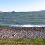 Cobble beach protecting from erosion on Flathead Lake