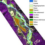 GIS map of habitat cover in the Nyack Floodplain, Middle Fork of the Flathead River