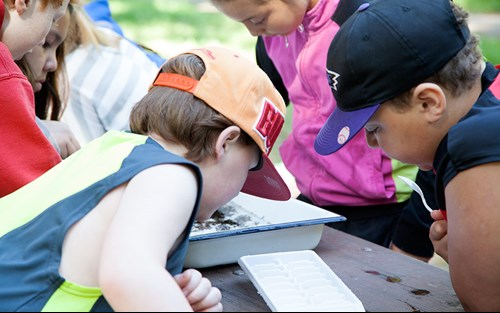 Students examine water samples for plants and animals found in Flathead Lake