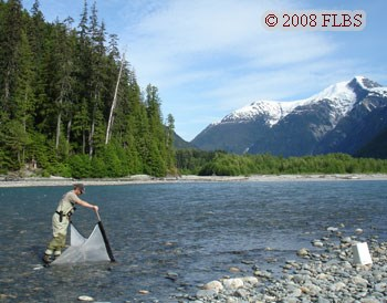 Kicknetting on the Kitlope River, B.C.
