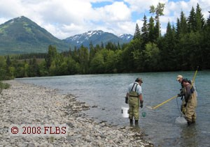Three project members electrofish the Kalum River, B.C.