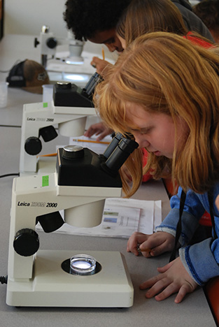 Student views water sample in a microscope