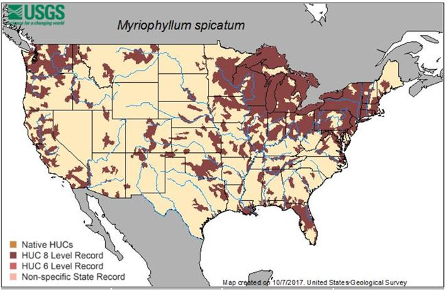 Map of invasive milfoil distribution in US